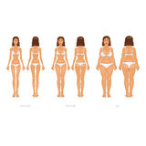Vector illustration of different  body types, set Royalty Free Stock Image