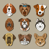 Vector illustration of different dogs breed. Vector illustration, EPS 10 Stock Photo