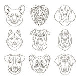 Vector illustration of different dogs breed. Vector illustration, EPS 10 Stock Image