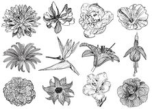 Vector illustration of different flowers (black and white) Stock Images