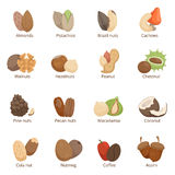 Vector illustration of different nuts. Vector set isolate Royalty Free Stock Photo