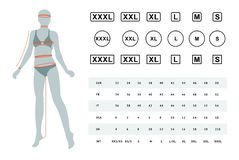 Vector illustration of the dimensions of a female body. The dimensions of the female waist, hips, chest, neck, head, arms, legs. Can be used for female linen stock illustration