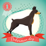 Vector illustration of doberman pinscher dog. Best in show dog, champion. Half tone background with red ribbon and medal Royalty Free Stock Photography