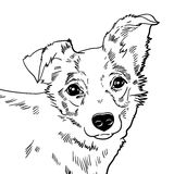 Vector illustration of the dog. Royalty Free Stock Photo