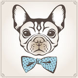 Vector illustration of the dog Stock Image