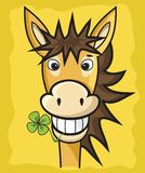 Donkey with clover Stock Photography