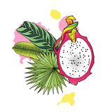 Color illustration of dragon fruit and tropical leaves royalty free stock images