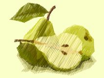 Vector illustration of drawing fruit pears. Stock Photography