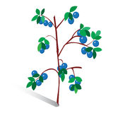 Vector illustration, drawn sprig of blueberries. On white background Royalty Free Stock Image