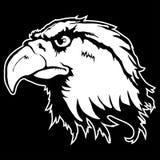 Vector illustration of an eagle head. Illustration of an eagle head Royalty Free Stock Photo