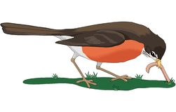 Early Bird Gets the Worm Illustration. A vector illustration of an early bird robin pulling up a worm royalty free illustration