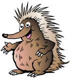 Vector illustration of an Echidna Royalty Free Stock Photography