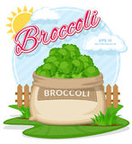 Vector illustration of eco products. Broccoli in burlap sack. Full sacks with fresh vegetables. Bag with harvest on the summer garden. Harvesting and food stock illustration