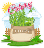 Vector illustration of eco products. Celery in burlap sack. Full sacks with fresh vegetables. Bag with harvest on the summer garden. Harvesting and food Royalty Free Stock Photography