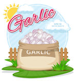 Vector illustration of eco products. Garlic in burlap sack. Full sacks with fresh vegetables. Bag with harvest on the summer garden. Harvesting and food Royalty Free Stock Images