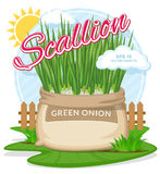 Vector illustration of eco products. Green onion in burlap sack.. Full sacks with fresh vegetables. Bag with harvest on the summer garden. Harvesting and food Royalty Free Stock Image