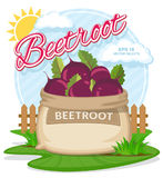 Vector illustration of eco products. Ripe Beetroot in burlap sack.. Full sacks with fresh vegetables. Bag with harvest on the summer garden. Harvesting and food Royalty Free Stock Photo