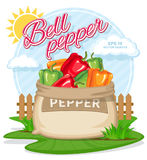 Vector illustration of eco products. Ripe Bell Pepper in burlap sack. Full sacks with fresh vegetables. Bag with harvest on the summer garden. Harvesting and Stock Photography