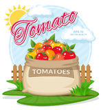Vector illustration of eco products. Ripe Tomatoes in burlap sack.. Full sacks with fresh vegetables. Bag with harvest on the summer garden. Harvesting and food Royalty Free Stock Photo