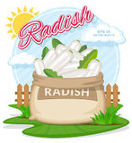 Vector illustration of eco products. Ripe White Radish in burlap sack. Full sacks with fresh vegetables. Bag with harvest on the summer garden. Harvesting and Stock Photos