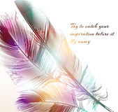 Vector illustration with engraved feathers conceptual background Royalty Free Stock Image