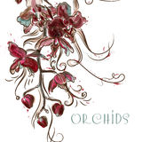 Vector illustration with engraved orchid flowers Royalty Free Stock Photos