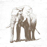 Vector illustration of engraving elephant Stock Photography