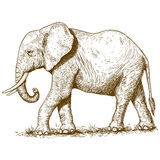 Vector illustration of engraving elephant Stock Image