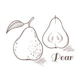 Vector illustration of engraving pear Stock Photography