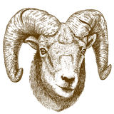 Vector illustration of engraving ram head Royalty Free Stock Photos