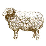 Vector illustration of engraving ram Royalty Free Stock Photo