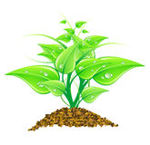 Vector illustration environmental concept Royalty Free Stock Image