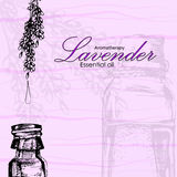 Vector illustration of essential oil of lavender Stock Image