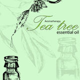 Vector illustration of essential oil of tea tree Stock Photos