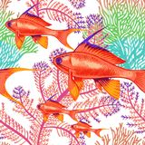 Seamless vector pattern with fish and corals. Vector illustration of exotic fish and corals. Seamless background. Design paper, wallpaper, packaging, textiles Royalty Free Stock Image