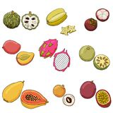 Vector illustration of exotic fruits. vector illustration