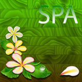 Vector illustration with exotic leaves, flowers Stock Image