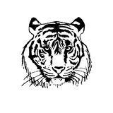 Vector illustration-the face of a tiger Royalty Free Stock Image