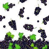 Vector illustration of falling black currant berries. Vector card illustration. Black currant fruit and leaves seamless royalty free stock photography