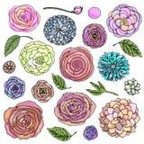 Vector illustration fantasy flower doodles set bright colour. Plants isolated on white background vector illustration