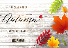 Vector illustration of fashion autumn sale banner. With wood tree texture, text sign 50 percent off, falling multicolor leaves rowan, maple, birch, willow Stock Photography