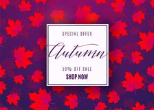 Vector illustration of fashion autumn sale poster. With geometric light frame, text sign 50 percent off, falling red maple leaves on dark violet background Stock Photography