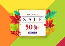 Vector illustration of fashionable autumn sale card template. With geometric frame, text sign 50 percent off, falling multicolor leaves oak, rowan, maple, birch Royalty Free Stock Image