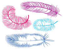 Vector illustration of feather Stock Photo