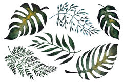 vector illustration of fern leaves. Hand painted watercolor green tropical leaves.  vector illustration Stock Photography