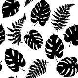 Vector illustration of fern and monstera. Vector botanical illustration of fern and monstera leaf. Isolated outline modern drawing of tropical plant. Set of Royalty Free Stock Photo
