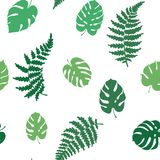 Vector illustration of fern and monstera. Vector botanical illustration of fern and monstera leaf. Isolated outline modern drawing of tropical plant. Set of Stock Photos
