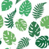 Vector illustration of fern and monstera. Vector botanical illustration of fern and monstera leaf. Isolated outline modern drawing of tropical plant. Set of Stock Images