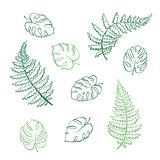 Vector illustration of fern and monstera leaves. Vector botanical illustration of fern and monstera leaf. Isolated outline modern drawing of tropical plant. Set Stock Photo