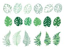 Vector illustration of fern and monstera leaves. Vector botanical illustration of fern and monstera leaf. Isolated outline modern drawing of tropical plant. Set Royalty Free Stock Images
